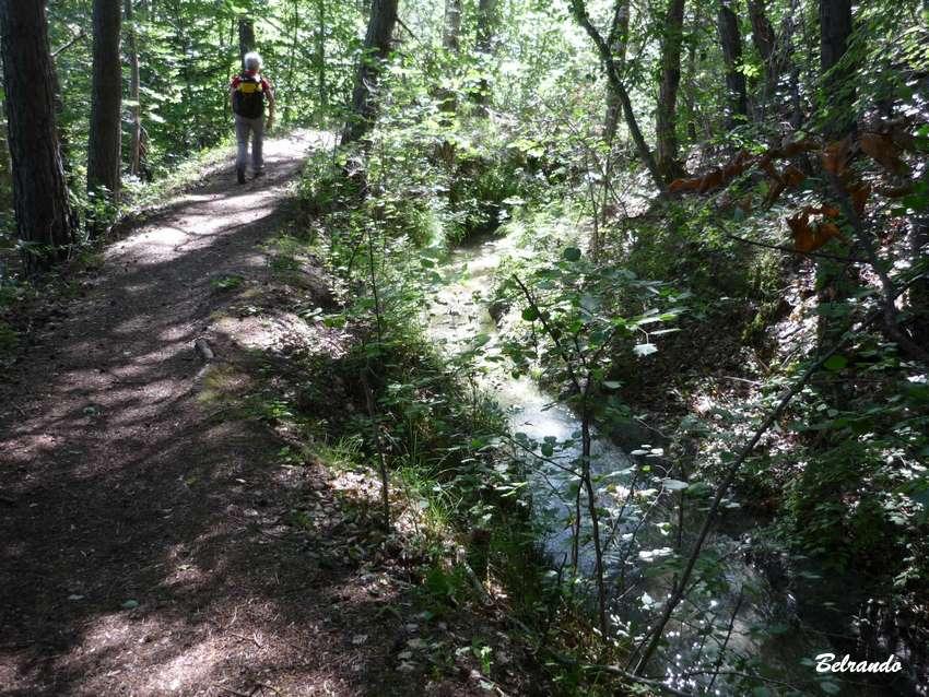 sentier en sous bois et canal