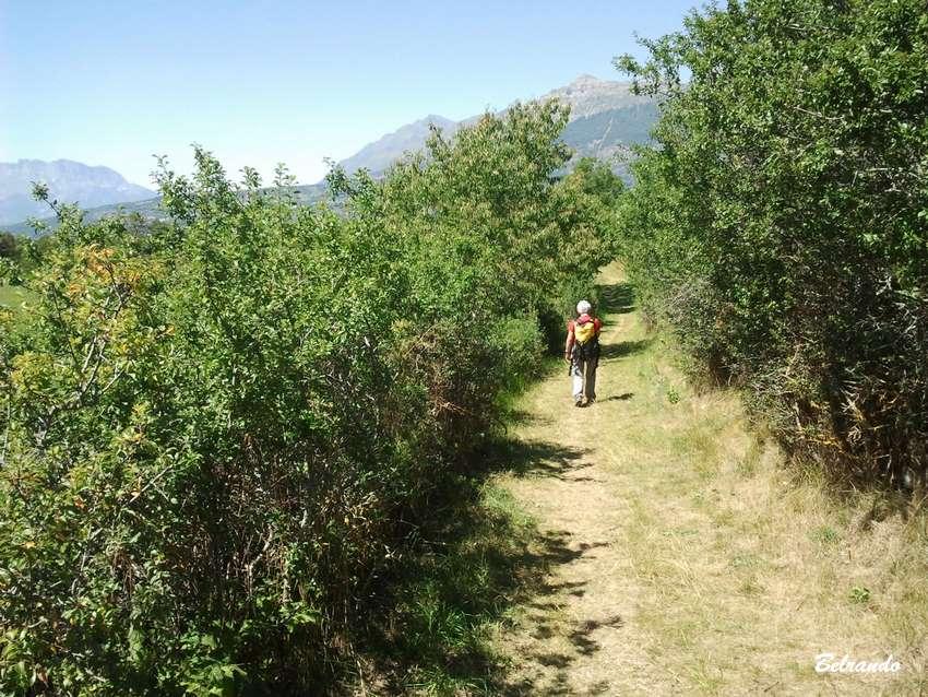 sentier bordé d'arbustes et randonneuse.
