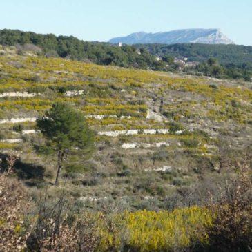 Le plateau de Saint-Martin à Eguilles en hiver. Vestiges et botanique.