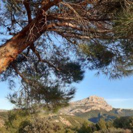 pin et sainte victoire versant ouest