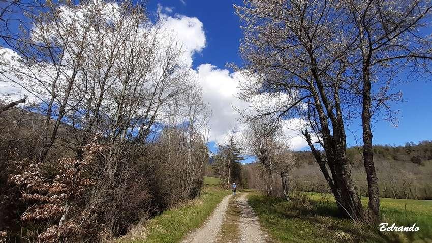 piste en tarre, arbres et prairie