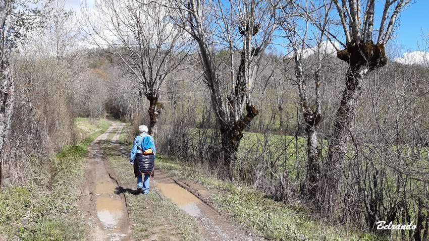 piste agricole et trognes