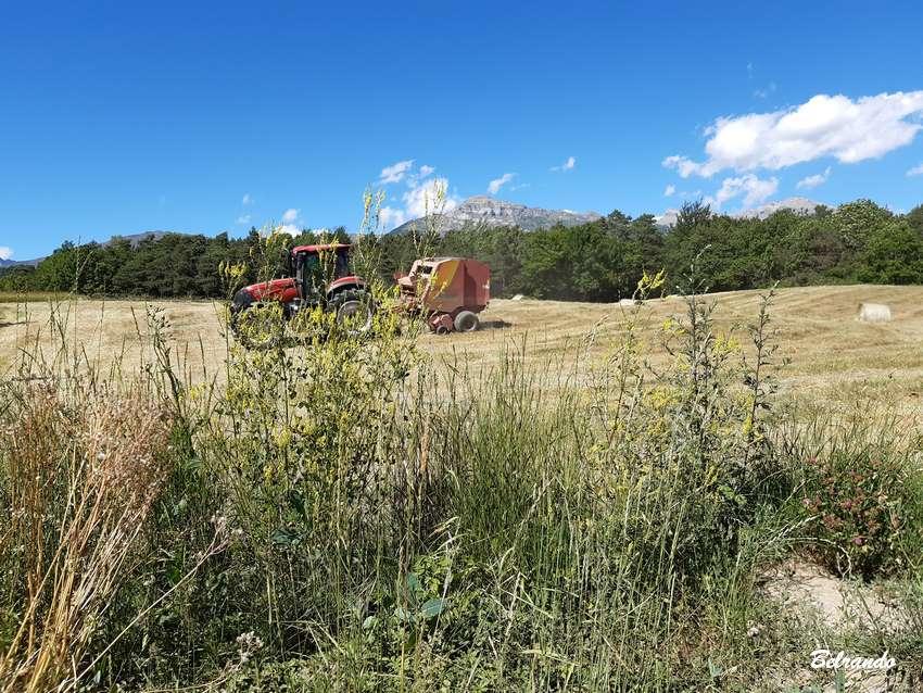 champ tracteur récolte